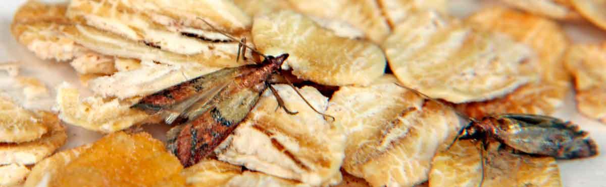 Motten bekämpfen und Hilfe gegen Motten